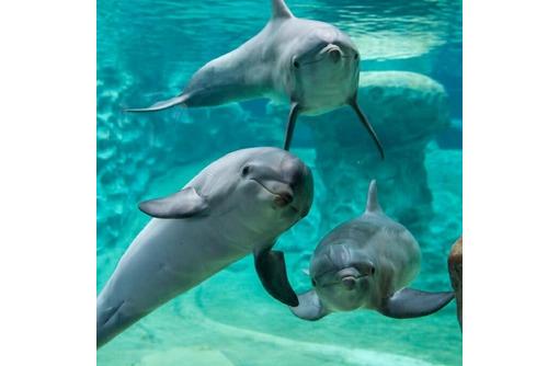 Где в Крыму увидеть дельфинов: афалину, белобочку и азовку ФОТО